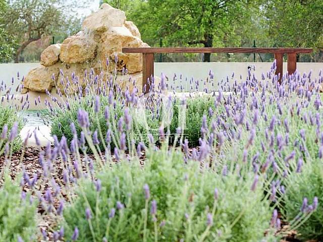 Вид на чудесный сад на вилле в краткосрочную аренду на Ибице