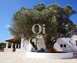 En un entorno idílico, casa rústica en alquiler en Formentera