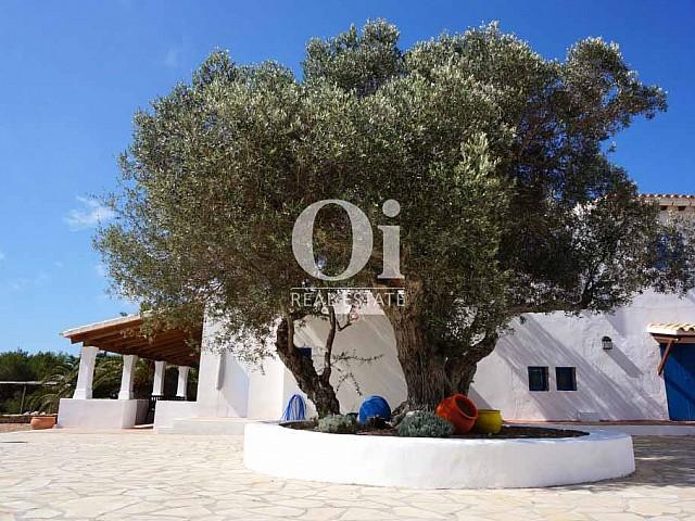 Blick auf die Fassade von rustikalen Haus zur Miete auf Formentera