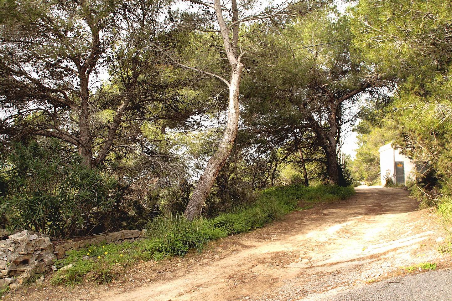 terreno boscoso en venta en urbanización de lujo en Ibiza