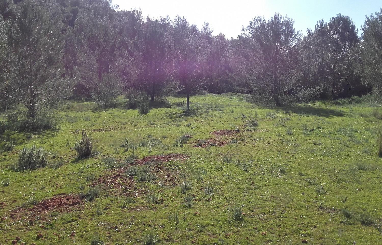 Земельный участок на продажу на Ибице