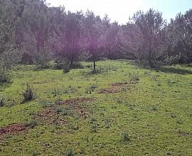 Parcel.la urbanitzable amb 26.000 m2 a Santa Gertrudis, Eivissa