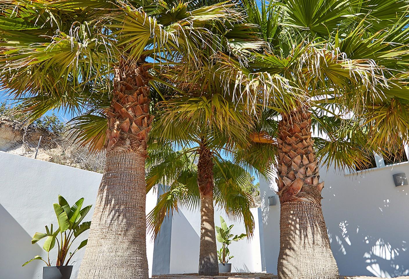 Роскошные пальмы виллы в аренду на Ибице
