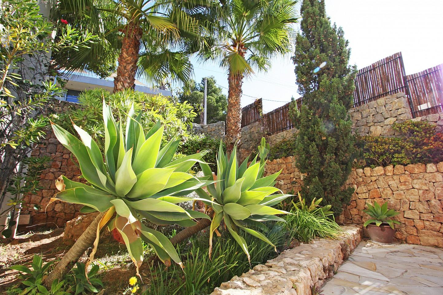 Jardines rodeados de palmeras