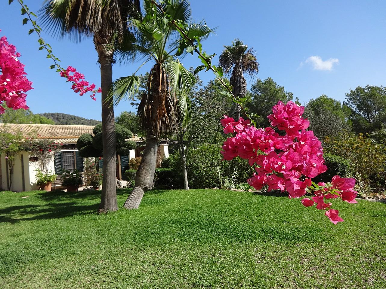 Живописный сад виллы в аренду в Кала Лонжа