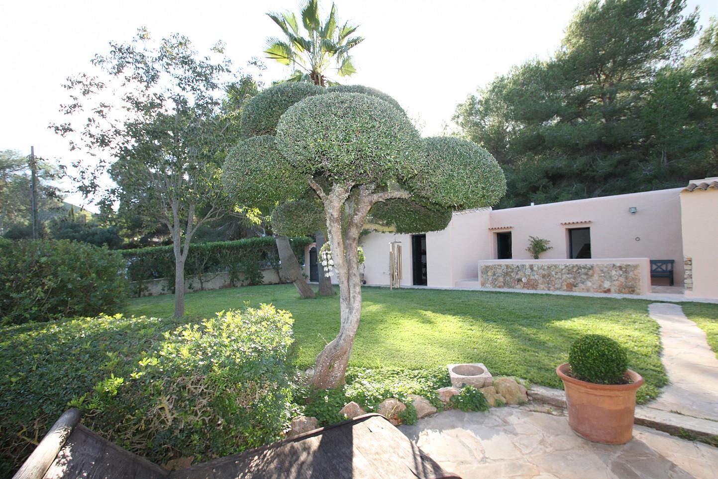 Jardins exteriors amb plantes tropicals i arbres